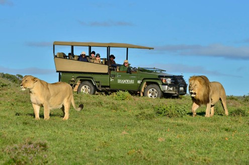 Shamwari Game Reserve Guest Experience
