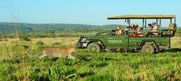Shamwari Game Reserve Professional Photographic Safaris by Iky's Photographic