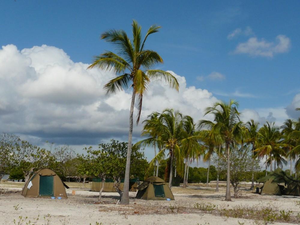 Palm tree camp.jpg