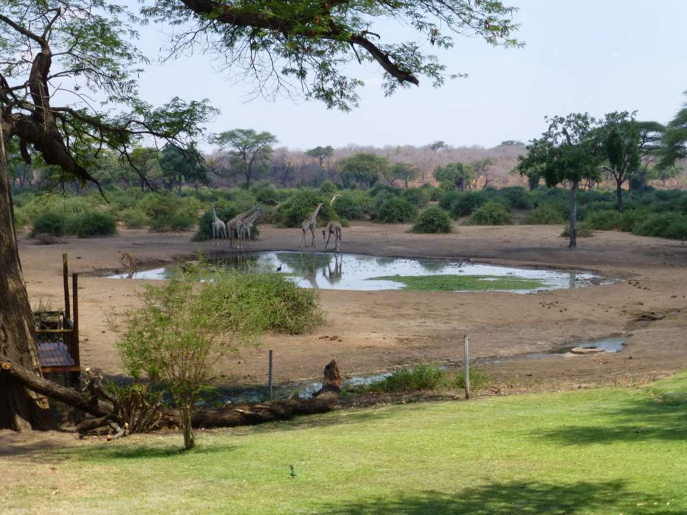 Elephant Valley Lodge Water Hole.jpg