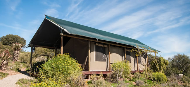 buffelsdrift-game-lodge-accommodation-in-oudtshoorn-luxury-tents-4