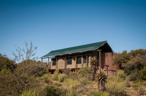 buffelsdrift-game-lodge-accommodation-in-oudtshoorn-luxury-tents-6