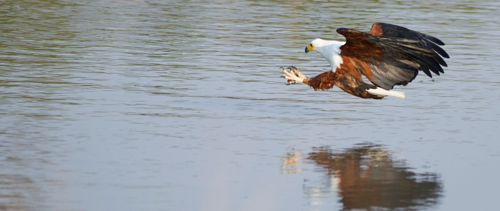02-eagle-coming-into-land.jpg