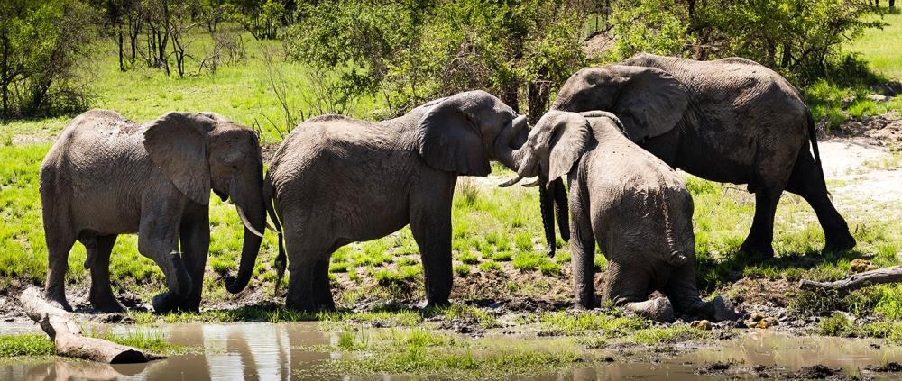 elephant-mud-bath-ulusaba.jpg