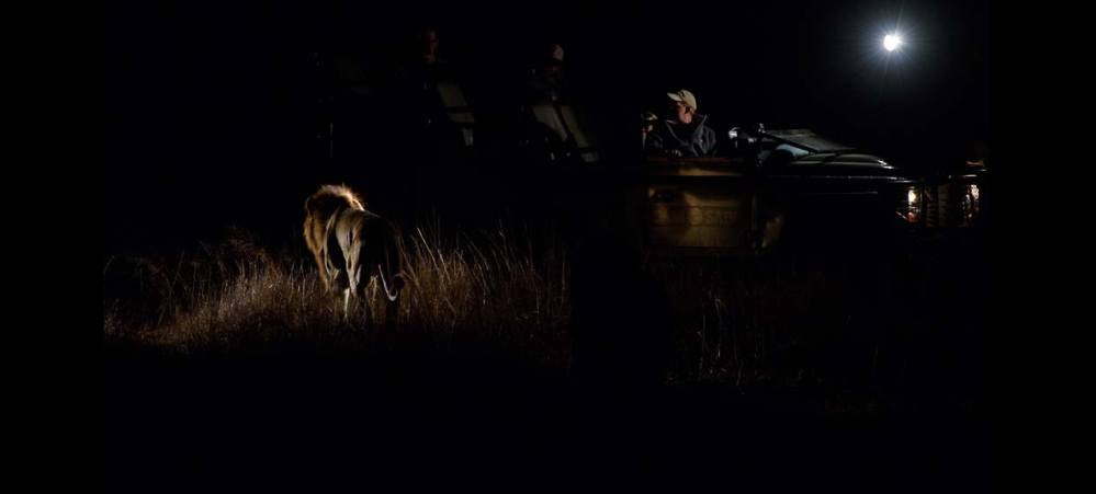 PM Game Drive.png