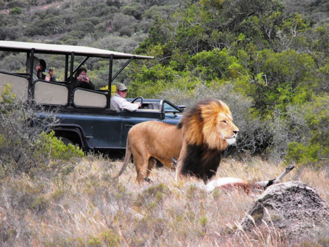 Eastern_Cape_Safari_Greater_Addo_Accommodation_Amakhala_Game_Lodge_Wildlife100_Sjpeg