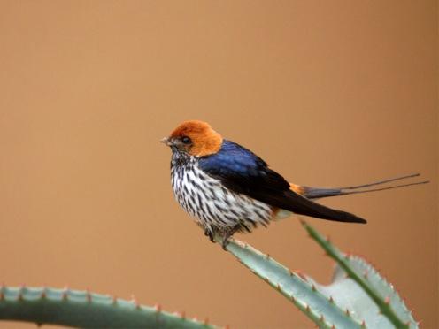 Leeuwenbosch Country House Amakhala Game Reserve Bird closeup