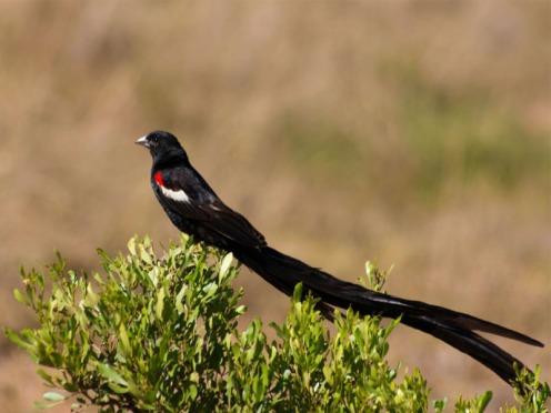 Leeuwenbosch Country House Amakhala Game Reserve Bird