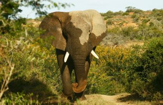 Kwandwe-Africa-elephant