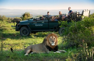 Kwandwe-Big-male-Lion-with-Game-Viewer