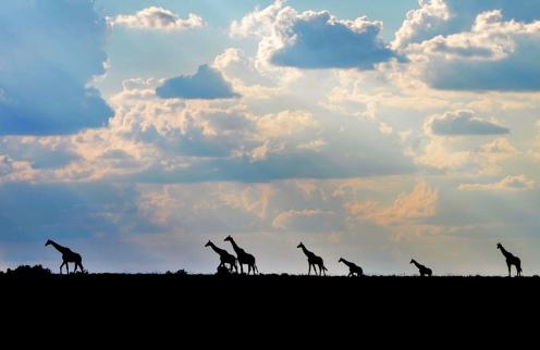 Kwandwe-giraffe-silhouette