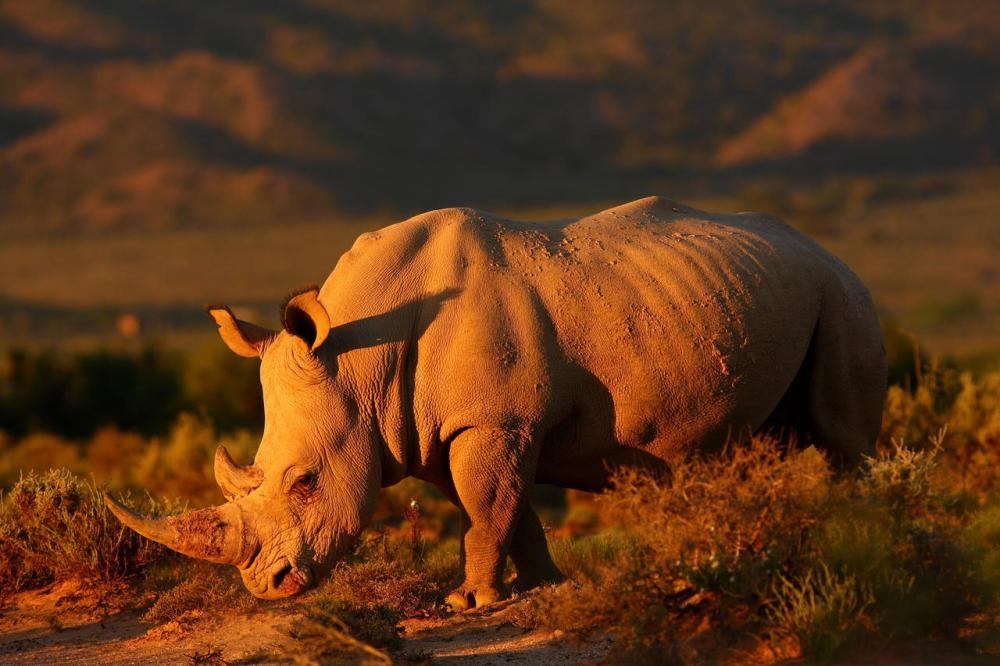 sanbona_wildlife_rhino.jpg